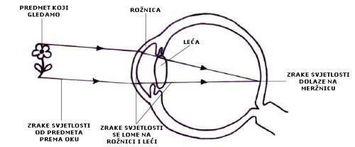 Put svjetlosti kroz oko (Foto: commons.wikimedia)