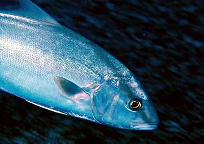 Gof (foto: Wikipedia)
