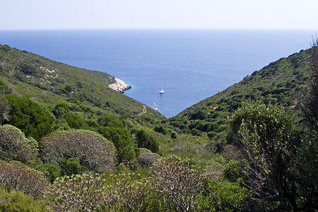 Biljni pokrov otoka Sušca (foto: Crotouristguide.com)
