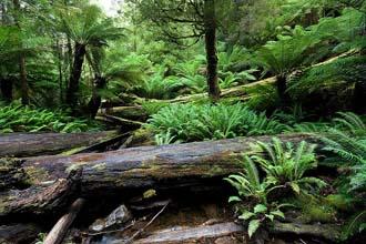 Tanzanijska tropska prašuma (foto: Wikipedia)