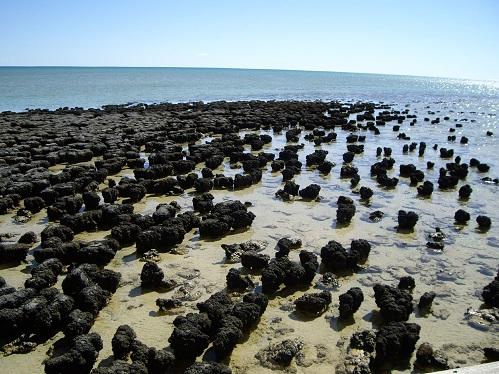 Stromatoliti u Zaljevu morskih pasa, zapadna obala Australije (Izvor: Wikimedia Commons)