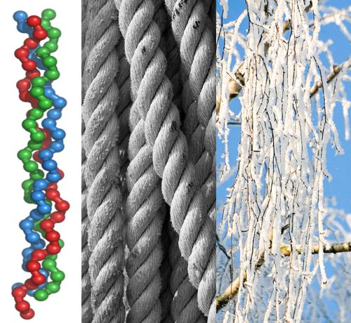 Kolagensko vlakno (Foto: Wikimeda, Flickr, S.van den Berg)