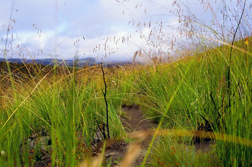 Slonova trava (foto: EOL)