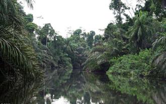 Kišna šuma u Africi (foto: Mongabay.com)