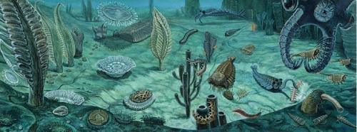Kambrijska fauna (Izvor: S dopuštenjem D. W. Millera, Dwmiller.net)