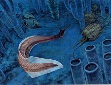 Isječak života kambrijske faune (Izvor: S dopuštenjem D. W. Millera, Dwmiller.net)