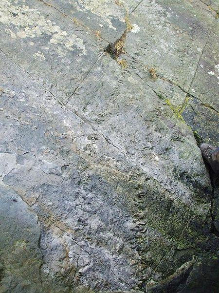 Fosilni tragovi divovske stonoge (Izvor: Wikimedia Commons)