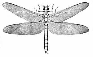 Crtež divovskog vretenca (Meganeura), Izvor: Wikimedia Commons