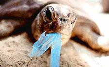 Morska kornjača jede ostatke plastične vrećice (foto: Flickr)