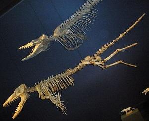 Fosilni ostaci Ambulocetusa (Izvor: Wikimedia Commons)