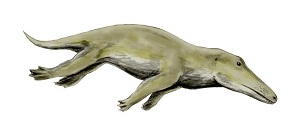 Ambulocetus, rekonstrukcija (Izvor: Wikimedia Commons)