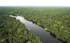 Amazona (foto: Greenpeace)