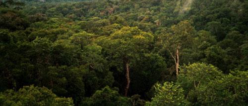 Sloj krošnje u amazonskoj prašumi (foto: Wikipedia)