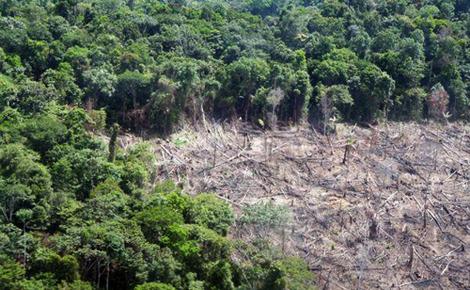 Deforestacija (foto: Mongabay.com)