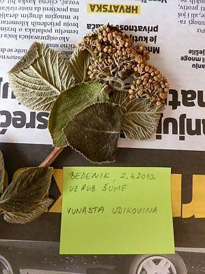Biljke za herbarij (foto: Behija Salkić)