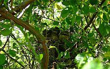 Ptičje gnijezdo (foto: Vedran Lucić)