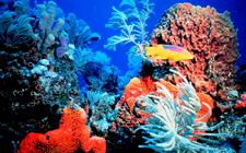 Koraljni greben (foto: NOAA)