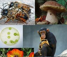 Raznolikost eukariota (Izvor: Wikimedia Commons)