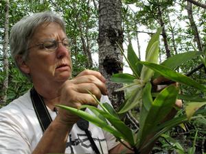 Terenski rad na zaštiti prirode u Panami (foto: Kennedy Warne)