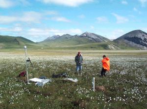 Znanstvenici vrše istraživanja travnjaka na Aljasci (foto: Vladimir Romanovsky)