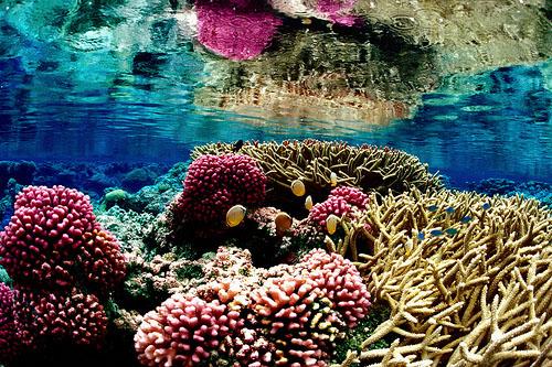Koraljni greben (foto: Flickr)