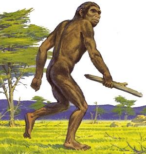 Homo habilis (Izvor: arthurs-clipart.org)