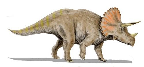 Triceratops (Izvor: Wikimedia Commons)