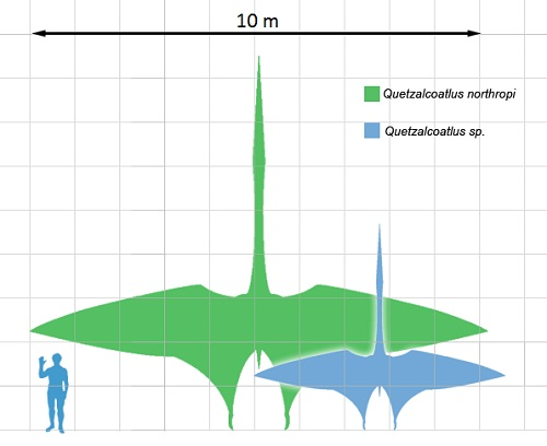 Usporedba veličine čovjeka i dva pripadnika roda Quetzalcoatlus  (Izvor: Wikimedia Commons)