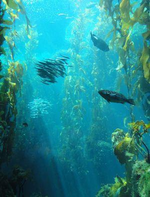 Podvodna